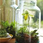 Stikliniai terariumai arba nuosavas sodas namie