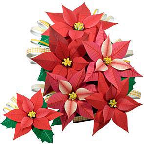 Poinsetija, gėlės dekoracija