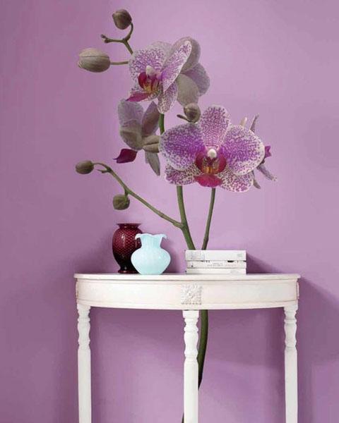 violetinė gėlė ant violetinės sienos