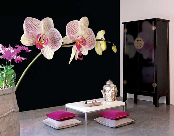 didelė orchidėja ant juodos sienos