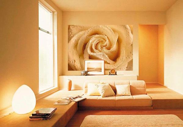 didelė rožė ant sienos, fototapetas