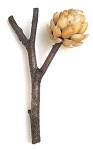 pistaciju ziedas, sakele