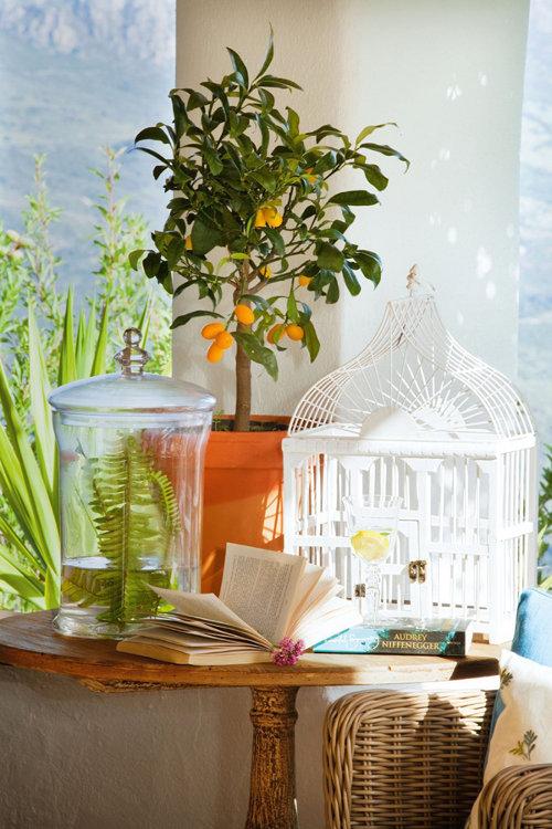 augalas su vaisiais, stalas