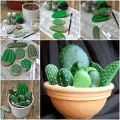 kaktusai akmenukai vazonelyje