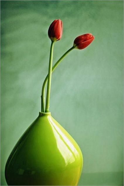 tulpes zalia vaza
